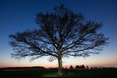 暮色树 库存图片
