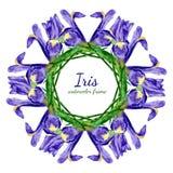 紫色虹膜花水彩花卉框架  图库摄影