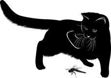 猫和蜻蜓 免版税库存照片