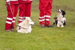 Μοίρα σκυλιών διάσωσης Στοκ Φωτογραφία