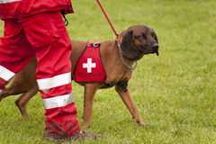 Μοίρα σκυλιών διάσωσης Στοκ Φωτογραφίες