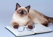 Читатель кота Стоковые Изображения