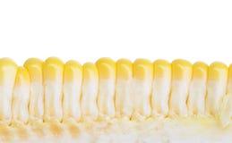 玉米的图象 免版税库存图片