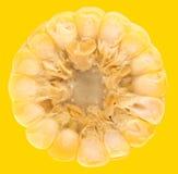 玉米的图象 库存图片