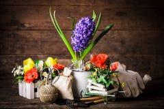 庭院从事园艺的春天工具 免版税图库摄影