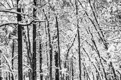 Сценарная картина леса зимы Стоковые Фотографии RF