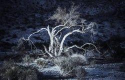沙漠植物群在晚上 免版税库存照片