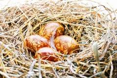 背景用在鸟巢的复活节彩蛋 免版税库存图片