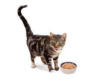 舔嘴唇的猫支持的食物碗 库存图片