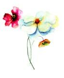 Αρχικά θερινά λουλούδια Στοκ Φωτογραφίες