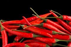 Ομάδα κόκκινων πιπεριών τσίλι Στοκ Φωτογραφία