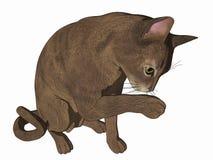 动画片猫清洁爪子 免版税库存照片