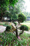 弯的结构树 库存图片
