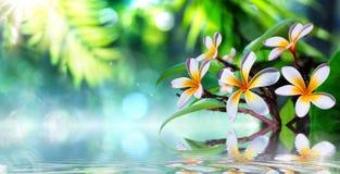 有赤素馨花的禅宗庭院 免版税库存照片