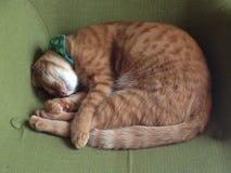 Νυσταλέα γάτα Στοκ φωτογραφίες με δικαίωμα ελεύθερης χρήσης