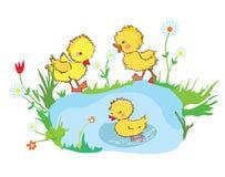 在池塘和花的滑稽的鸭子 免版税库存图片