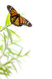 Бабочка на заводе изолированном на белизне, предпосылке границы Стоковые Фото