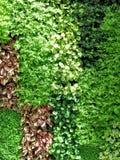 Предпосылка стены листьев Стоковая Фотография
