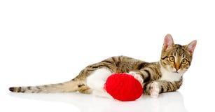 играть кота шарика На белой предпосылке Стоковые Фото