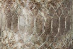 蛇皮皮革纹理 图库摄影