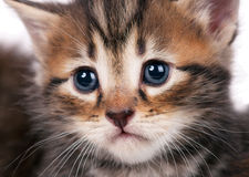 Χαριτωμένο γατάκι Στοκ εικόνα με δικαίωμα ελεύθερης χρήσης