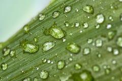Падения лист Стоковые Фото