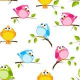 Άνευ ραφής σχέδιο με τα πουλιά χρώματος Στοκ Φωτογραφίες
