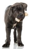 与骨头的小狗 免版税库存图片