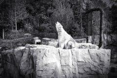 Белый охотник полярного медведя - сидящ Стоковые Фото