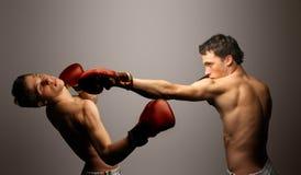 боксер Стоковые Изображения RF