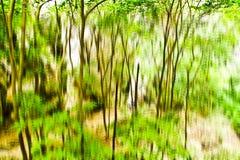 Θολωμένη αφηρημένη φωτογραφία υποβάθρου του δάσους με την υπερφυσική επίδραση θαμπάδων κινήσεων Στοκ εικόνα με δικαίωμα ελεύθερης χρήσης