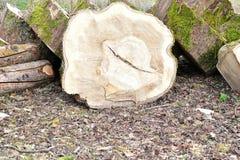 το ξύλο συνδέεται το έδαφος Στοκ φωτογραφίες με δικαίωμα ελεύθερης χρήσης