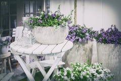 Сад весны домашний Стоковые Фото