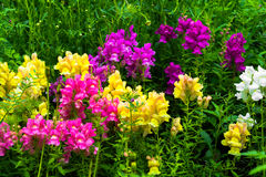四季不断的芬芳庭院花 免版税库存照片