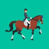 Άλογο εκπαίδευσης αλόγου σε περιστροφές και αναβάτης, ιππικός αθλητισμός Στοκ Εικόνα