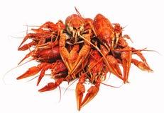 红色在白色背景的煮沸的小龙虾 图库摄影