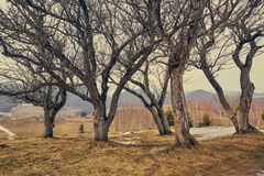 Группа в составе деревья граба Стоковое фото RF