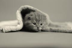 Γατακιών μωρών κάτω από μια πετσέτα Στοκ Φωτογραφία