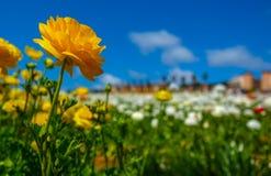 开花的花在春天 免版税库存图片