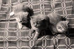 Χαριτωμένα πρόσφατα γεννημένα γατάκια Στοκ εικόνα με δικαίωμα ελεύθερης χρήσης