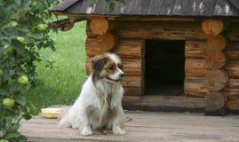 Σκυλί κοντά στα ίχνη Στοκ Φωτογραφία