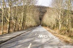 平直的乡下公路标示用树 免版税库存图片