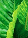 热带抽象的叶子 图库摄影