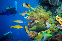 Тропические рыбы и коралловый риф Стоковые Фото