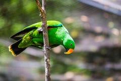 Зеленый попугай в дереве Стоковое фото RF