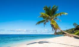 在热带海滩,塞舌尔群岛的可可椰子树 库存照片