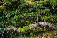在岩石的青苔与水注 免版税库存照片