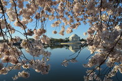 Φεστιβάλ ανθών κερασιών Ουάσιγκτον, συνεχές ρεύμα Στοκ φωτογραφία με δικαίωμα ελεύθερης χρήσης