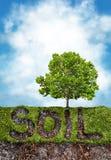 土壤和草在树下 免版税库存图片