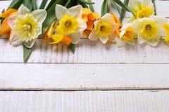 与新鲜的郁金香和水仙的背景 免版税图库摄影